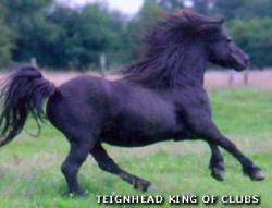 TEIGNHEAD KING OF CLUBS (GB)
